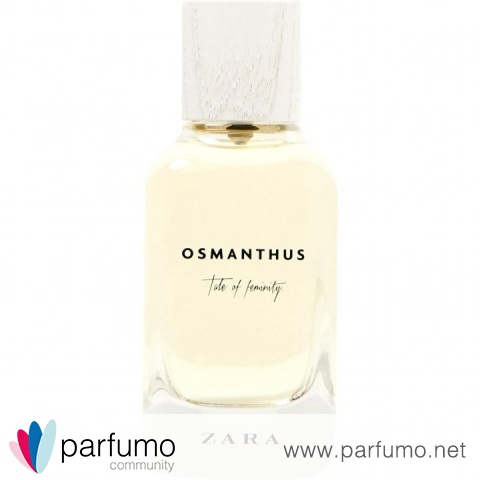 Osmanthus by Zara