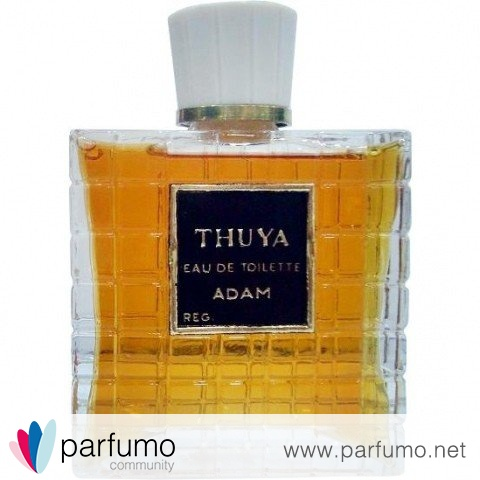 Thuya by Adam