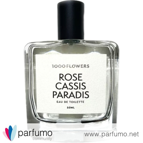 Rose Cassis Paradis by 1000 Flowers