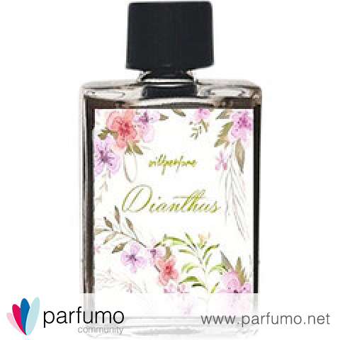 Dianthus by Wild Perfume